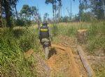 Nova Nazaré - IBAMA prende três extraindo madeira na terra indígena Xavante Areões