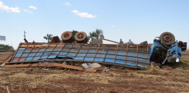 Água Boa - Caminhão gaiola tomba carregado com bois na BR-158 (atualizada)