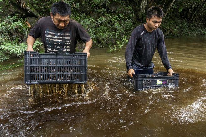 Para inspirar nova geração, povo Wai Wai publica cartilha sobre manejo da castanha