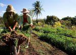 Agricultura familiar - Sicredi apresenta soluções financeiras para os pequenos produtores